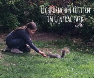 eichhoernchen-fuetternim-central-park